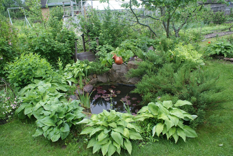Photo of the garden pond n.34