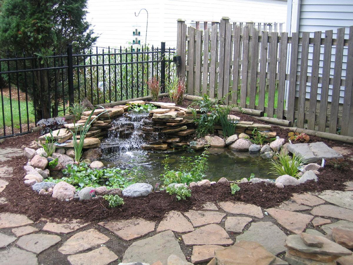 Photo of the garden pond 24