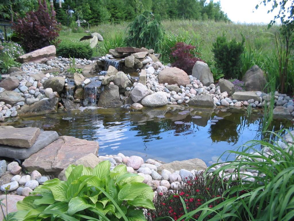 Photo of the garden pond n.07
