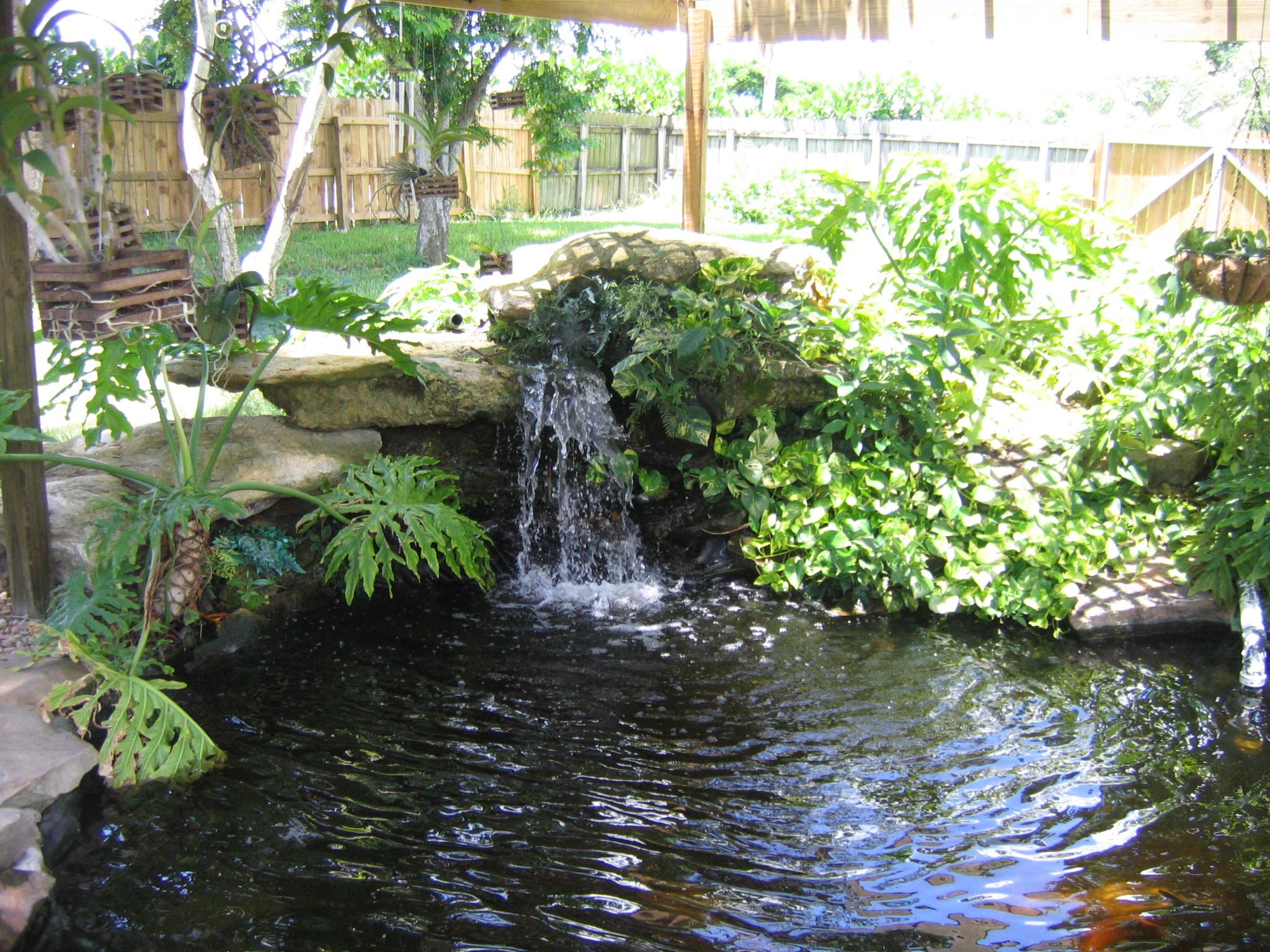 Garden pond photo # 18