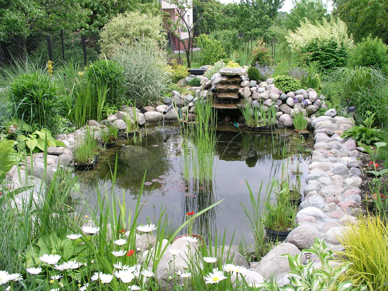Photo of the garden pond n.03