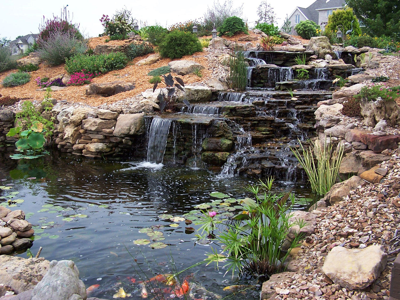 Photo of the garden pond 21