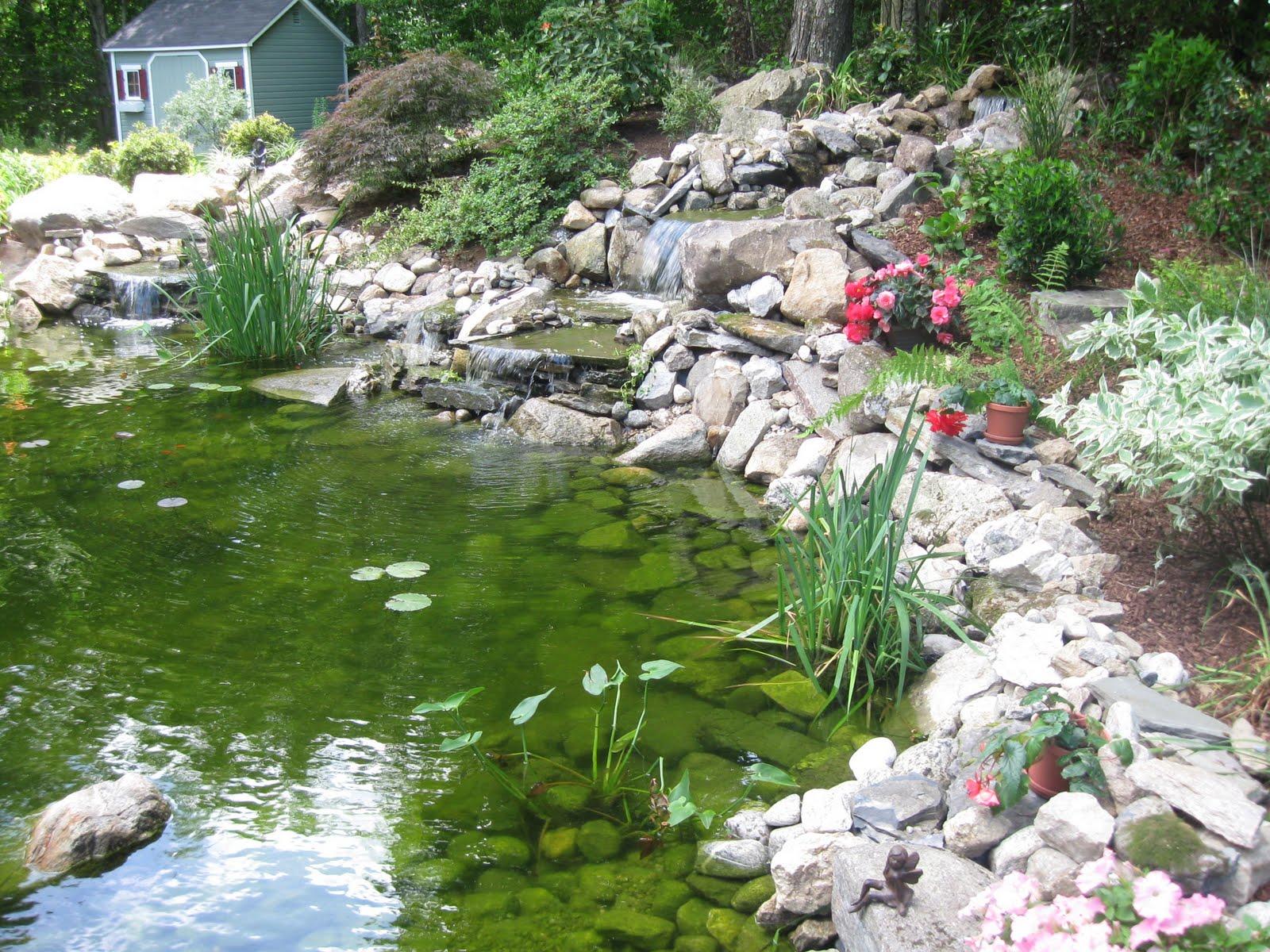 Photo of the garden pond # 26