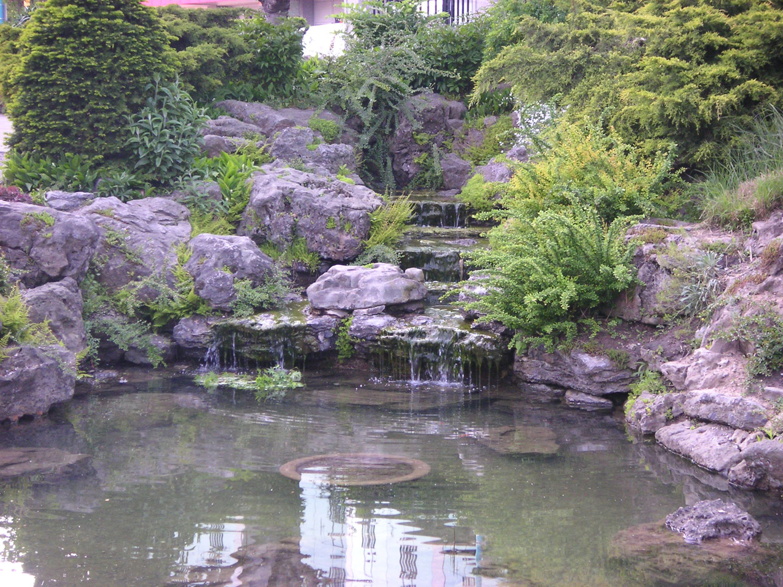 Photo of the garden pond 31