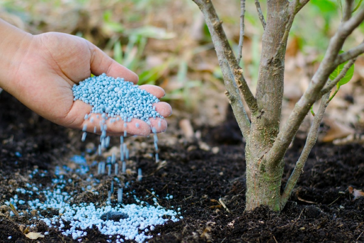 Fertilizer_ how and when to use it right 4