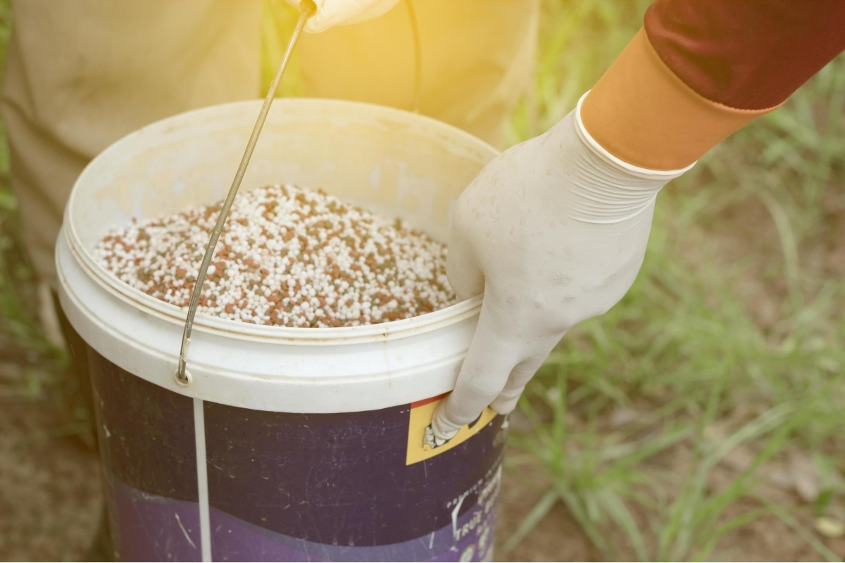 Fertilizer_ how and when to use it right 5