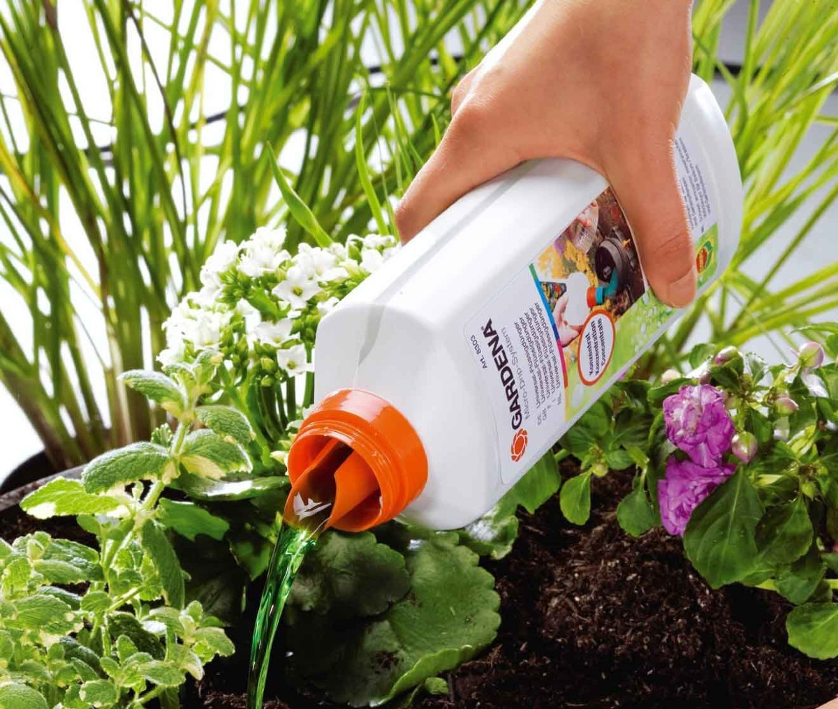 Fertilizer which one to choose for balcony plants 2