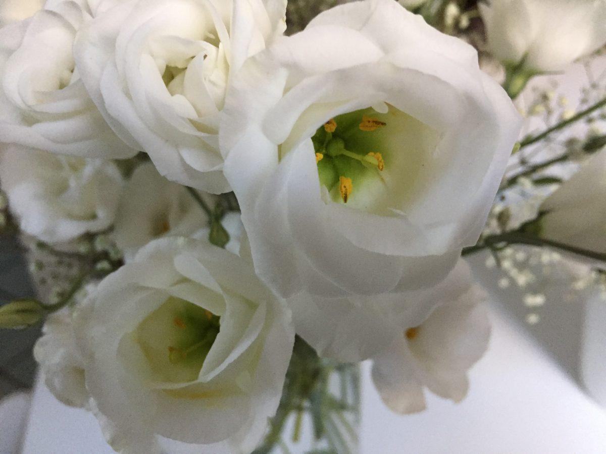 lisiantus-flowers-white