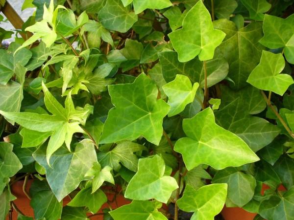 ivy-common