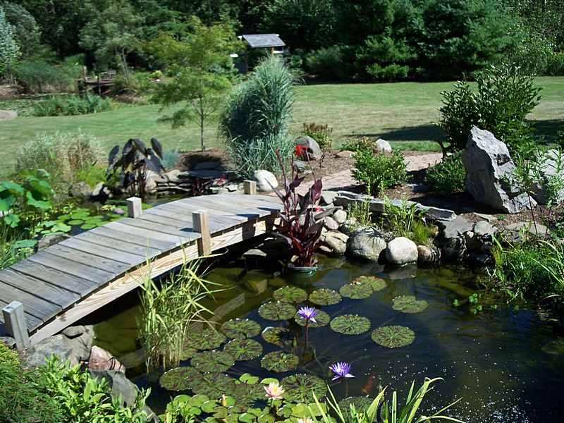 Photo of the garden pond n.01