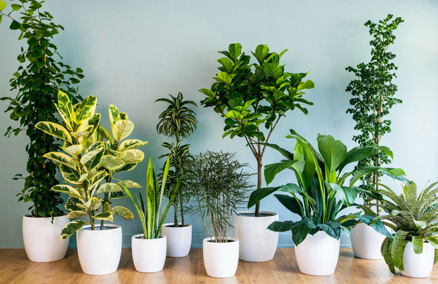 Where to place indoor plants