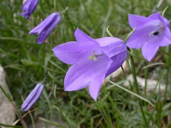 flowers-bells