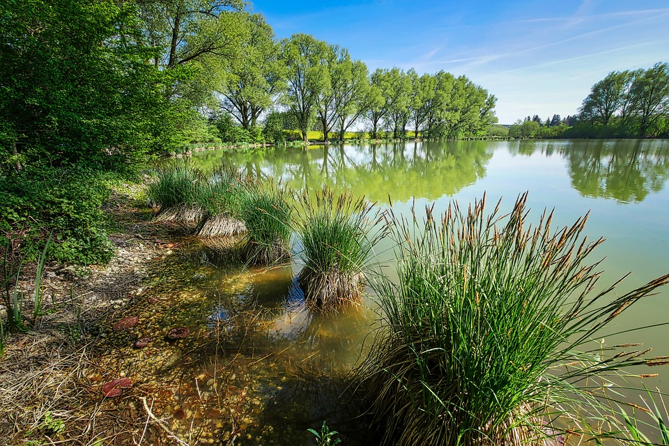 Aquatic plants - Marsh plants