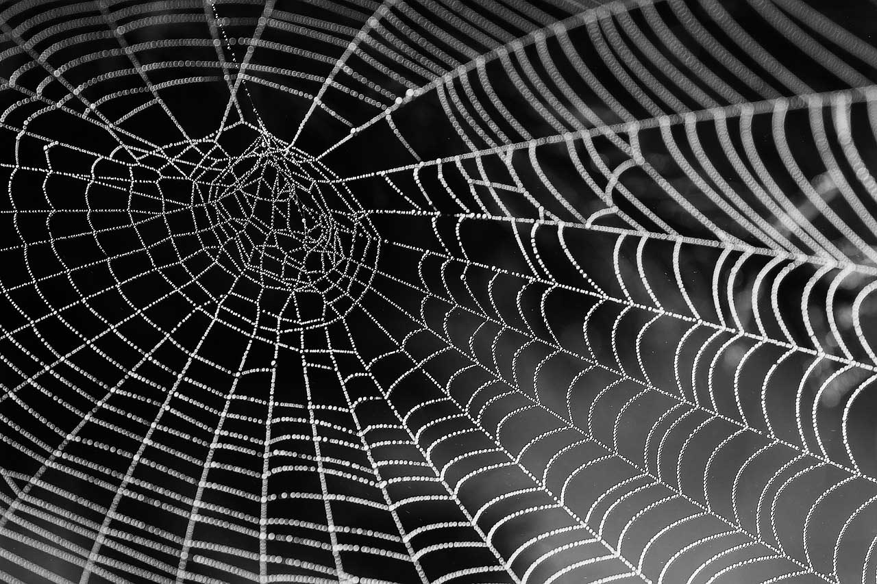 spider-violin-what-to-do-pest control-0