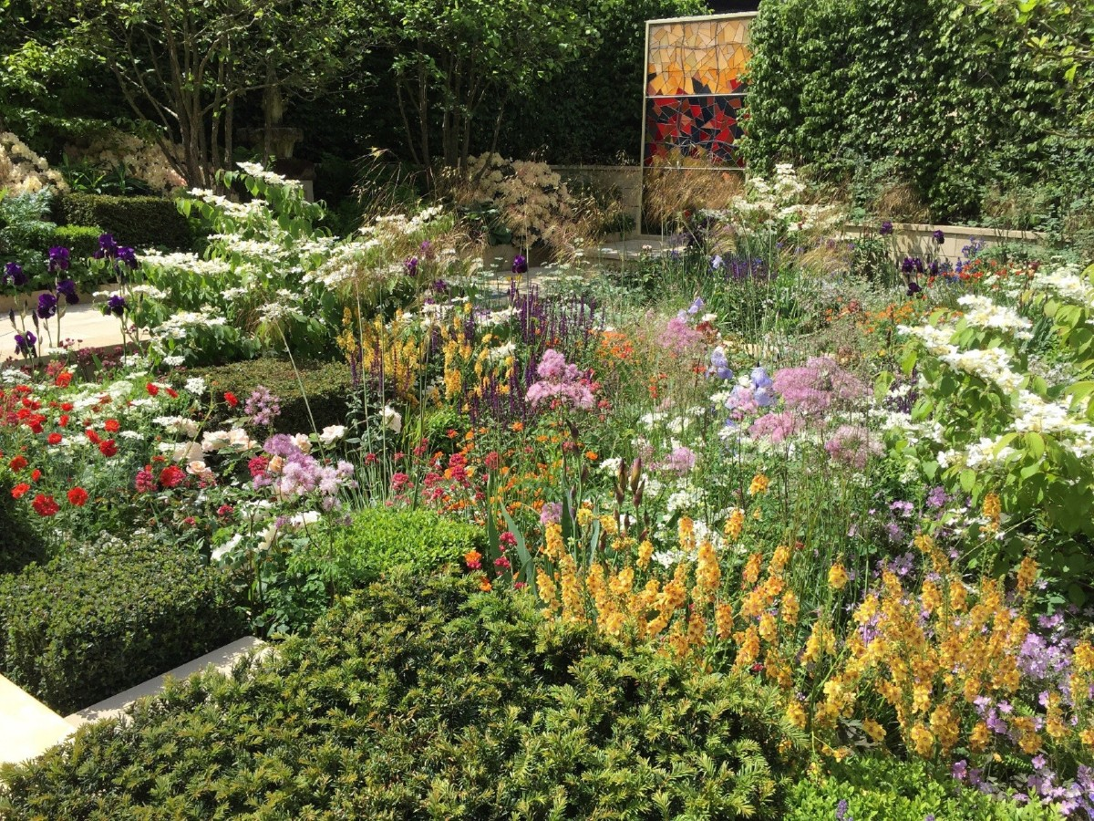 Flowering meadow_ how and when to sow 4