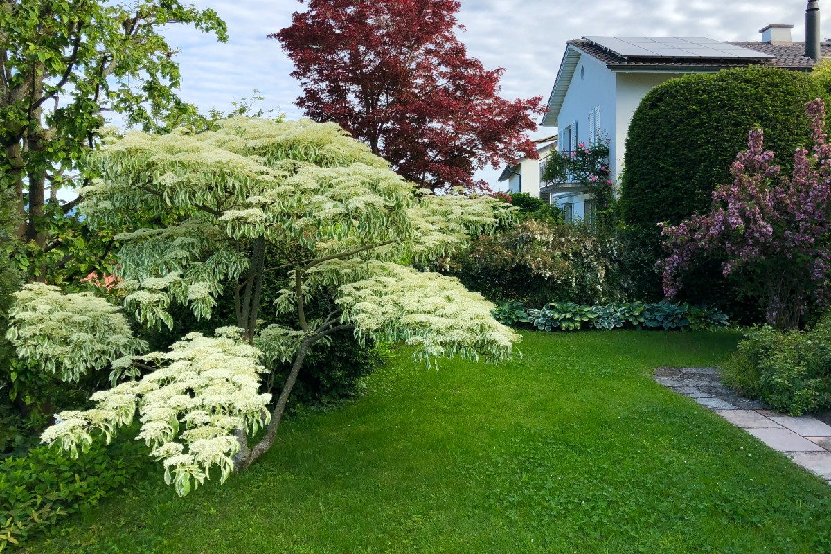Lawn how and when to sow 1