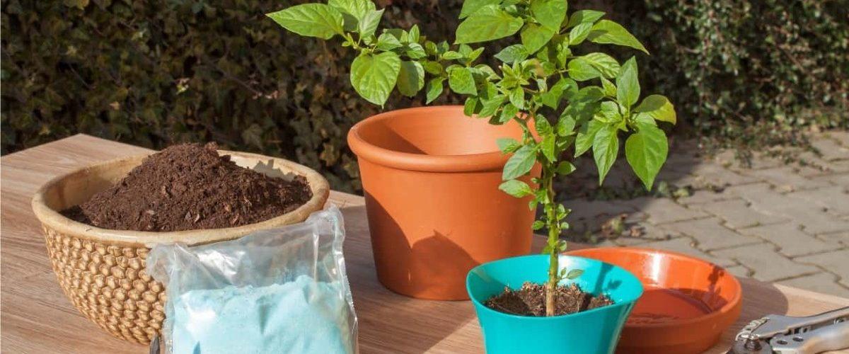 Fertilizzante quale scegliere per le piante da balcone 1