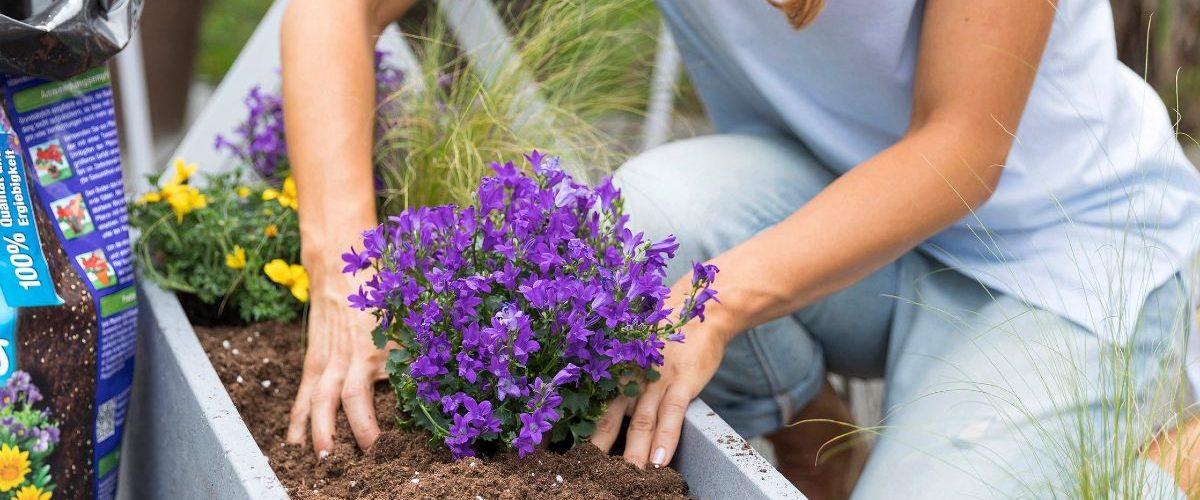 Concime quale scegliere per le piante da balcone 1