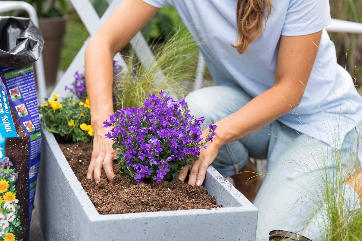Fertilizer which one to choose for balcony plants 1