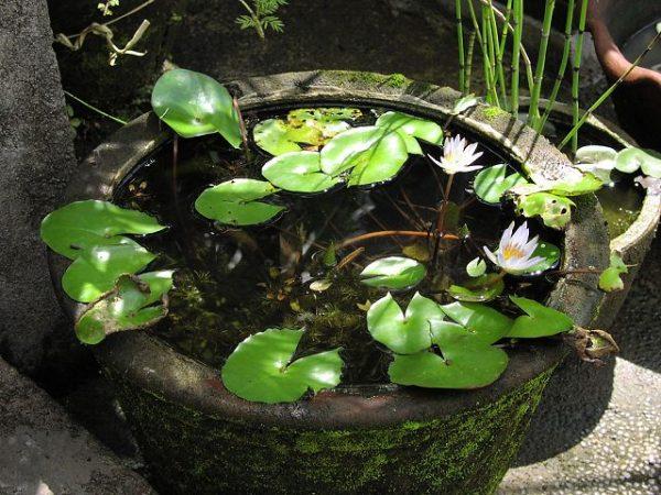 water lilies- vase