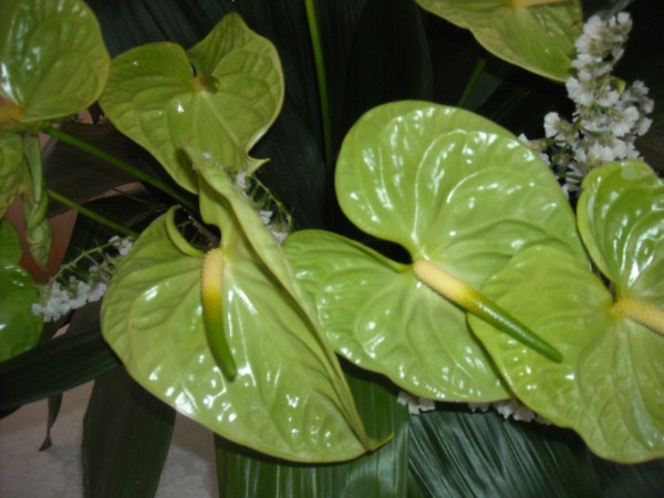 anturi-green-bride