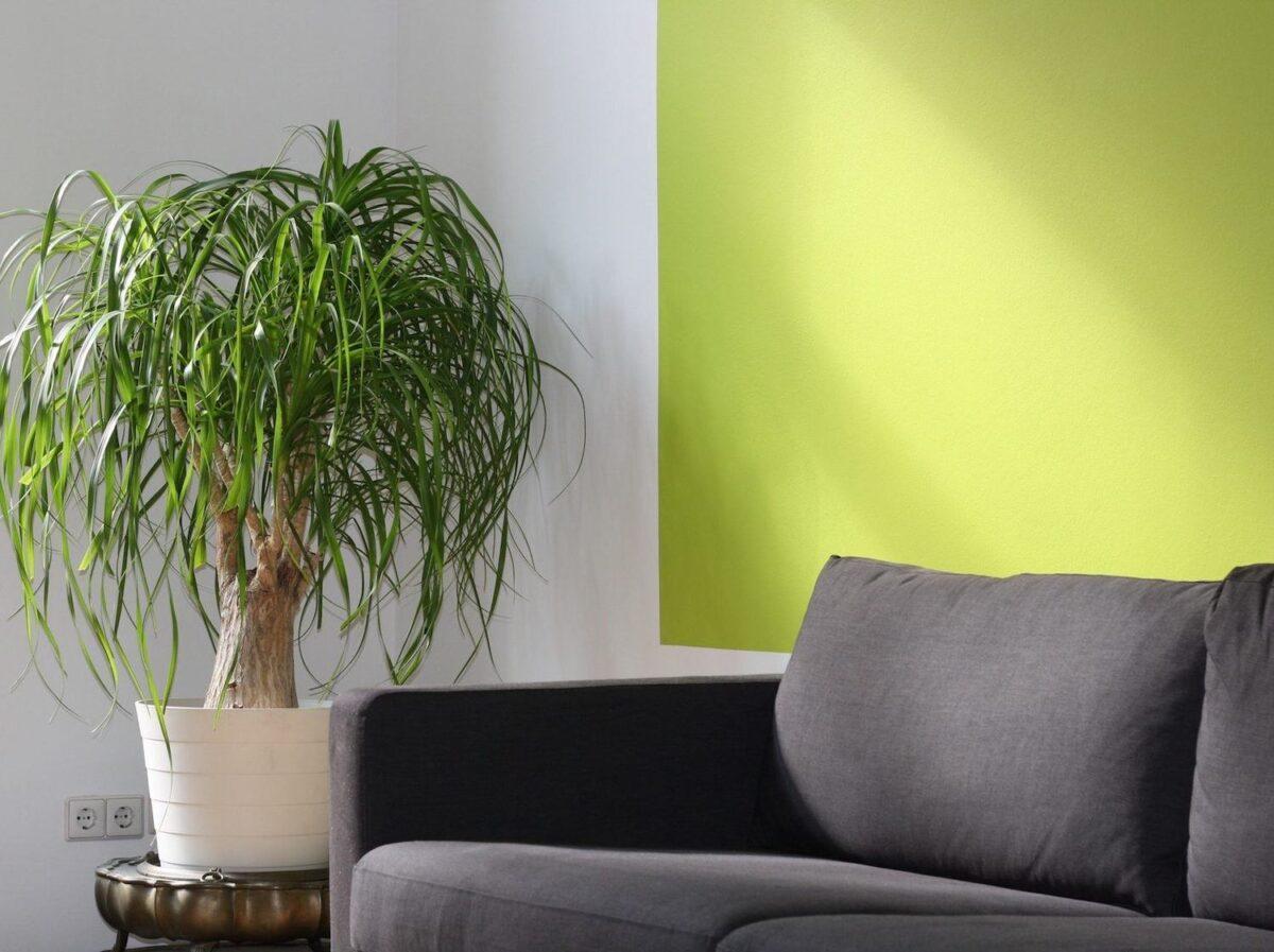 living room-walls-lime-green-18