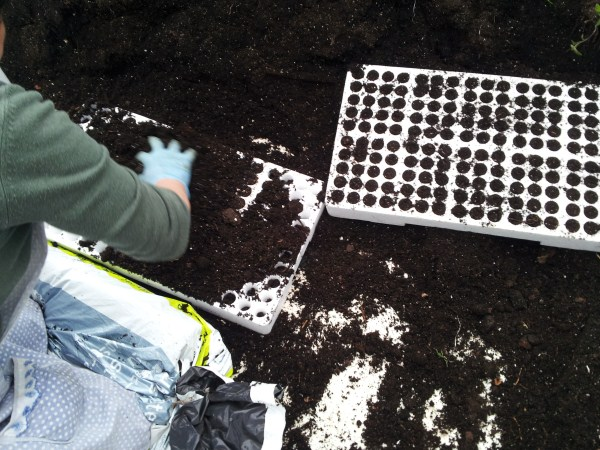 Sowing-seedbed