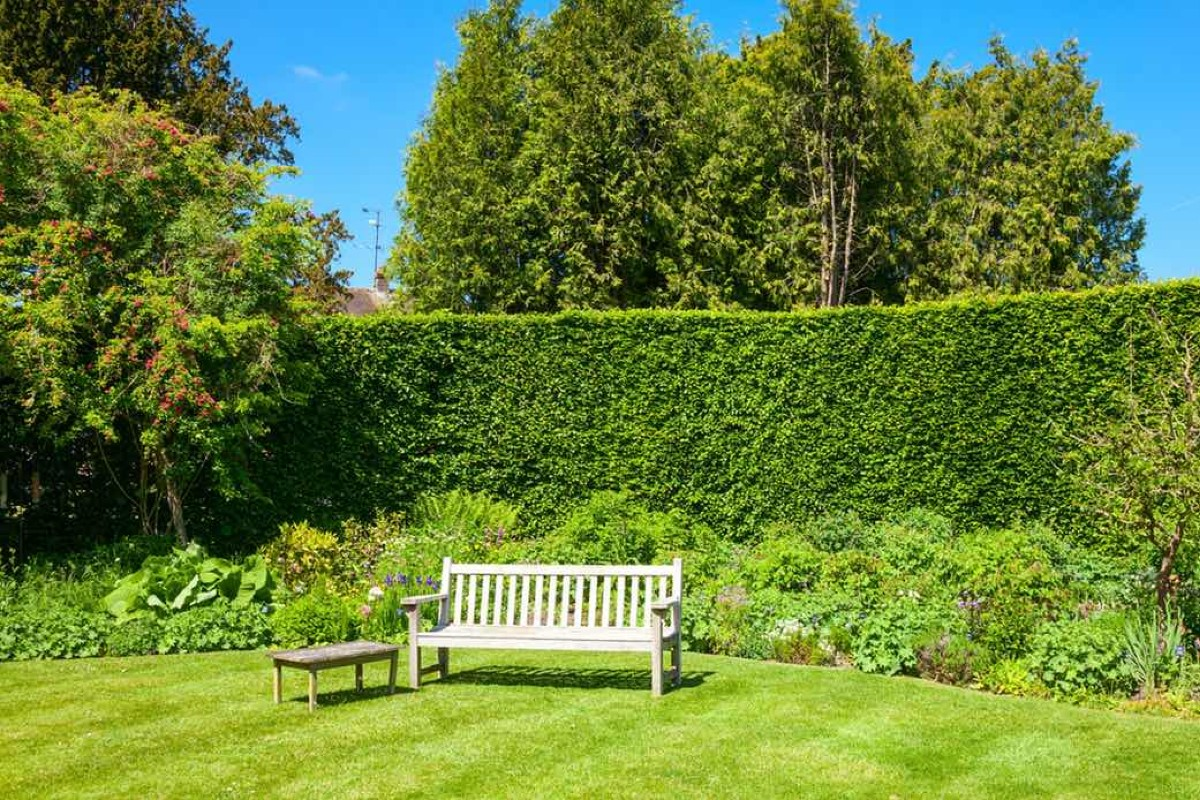 How to choose the best hedges for the garden 5