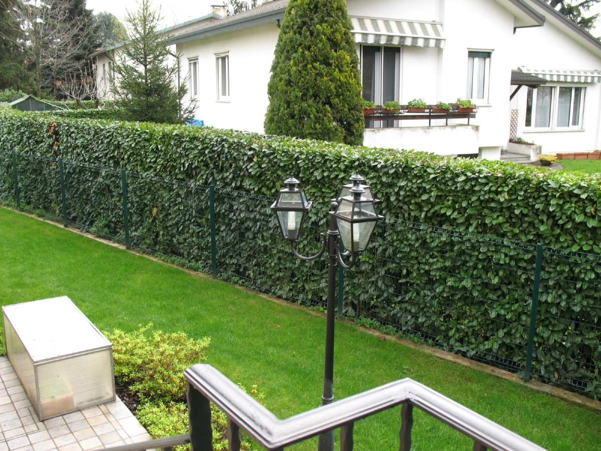 How to choose the best hedges for the garden 6