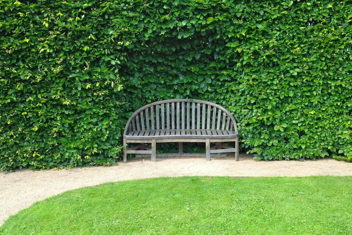 How to choose the best hedges for the garden 2