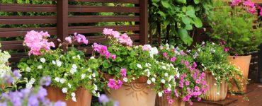 Come abbinare le piante giuste sul proprio balcone 5