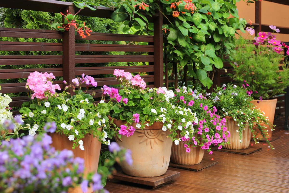 How to match the right plants on your balcony 5