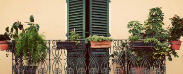 Come abbinare le piante giuste sul proprio balcone 1