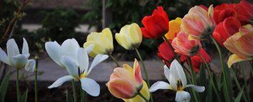 Fiori Maggio giardino