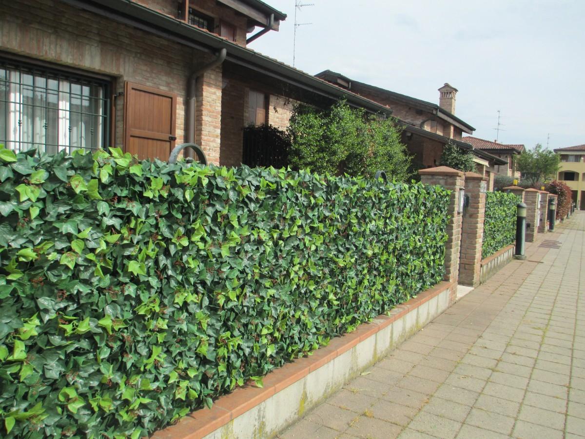 climbing ivy hedge 5