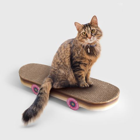 skateboard scraper