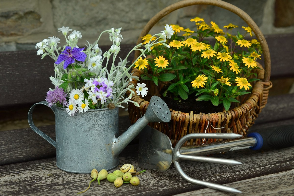 June flowers what you need to know 8