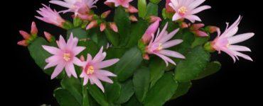 7 piante grasse colorate da avere assolutamente 8