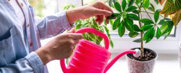 Gli errori da non commettere quando annaffiamo le piante 1