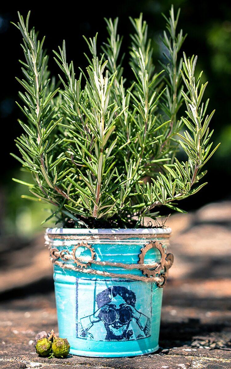 Rosemary, Flowers