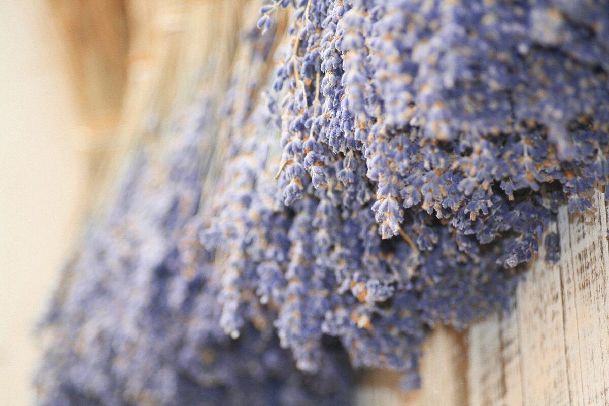 Lavender, Dried