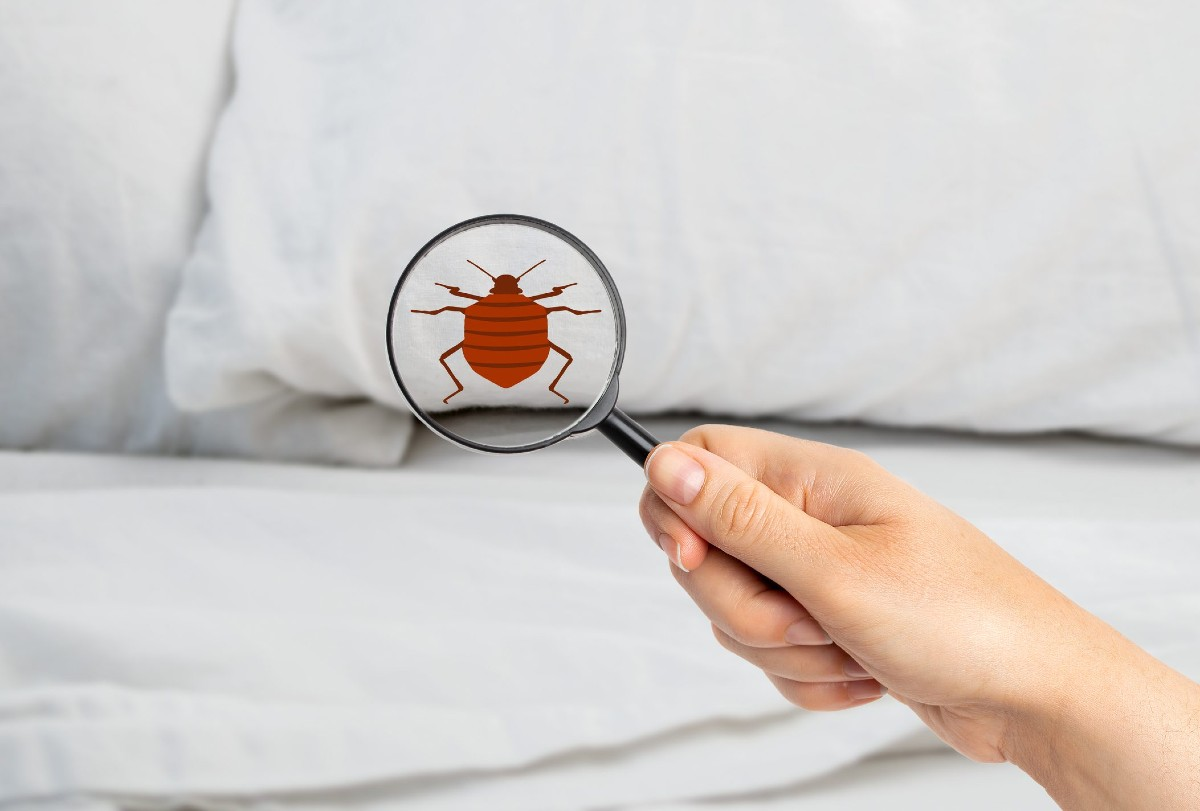 Bed bugs how to recognize the bites and how to intervene 2