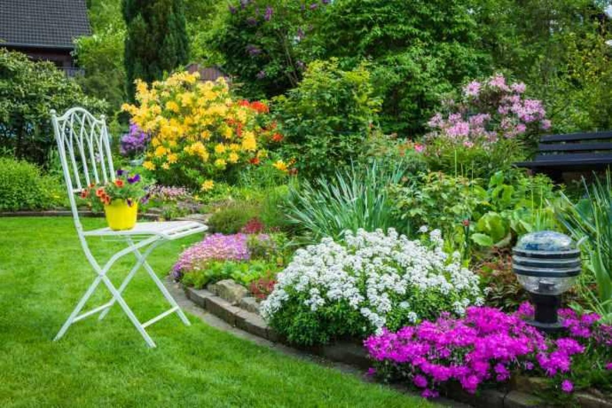 10 colorful plants for the garden 1