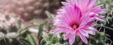 piante-grasse-fiori-cover