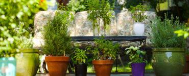 piante-antizanzara-balcone-cop